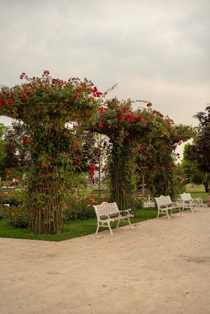 maltepe parkında gül bahçesi